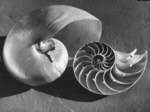 Fitz Goro shell